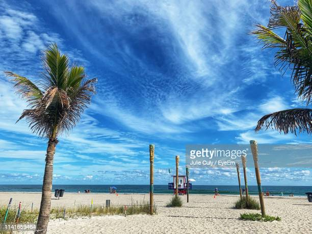 palm trees on beach against sky - julie culy stock pictures, royalty-free photos & images