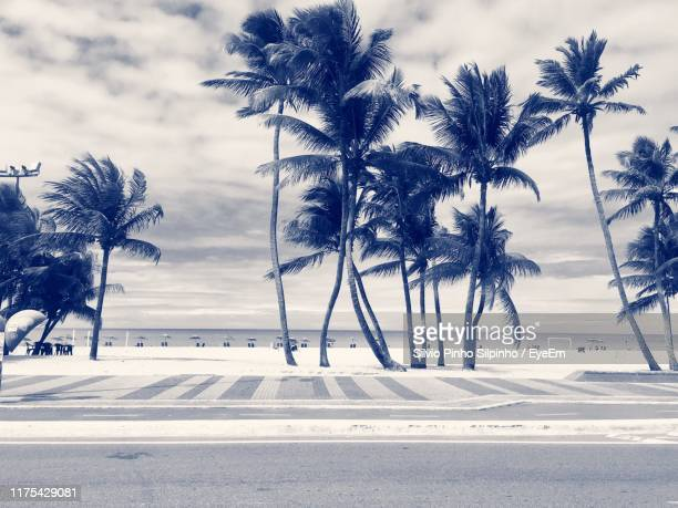 palm trees on beach against sky - north america stock pictures, royalty-free photos & images