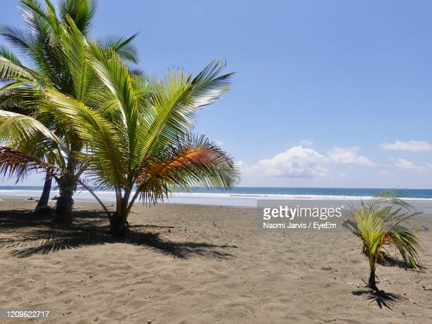 palm trees on beach against sky - naomi jarvis stock pictures, royalty-free photos & images