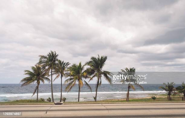palm trees on beach against sky - bortes stock pictures, royalty-free photos & images