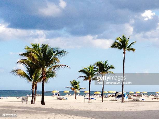 palm trees on beach against sky - fort lauderdale stock pictures, royalty-free photos & images