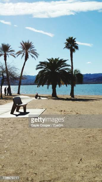 palm trees on beach against sky - lake havasu stock photos and pictures
