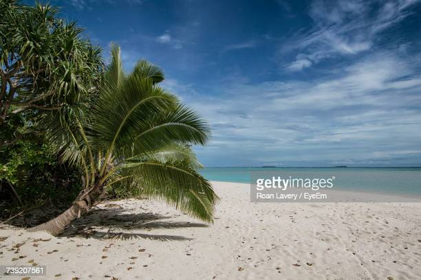 palm trees on beach against sky - tonga stock pictures, royalty-free photos & images
