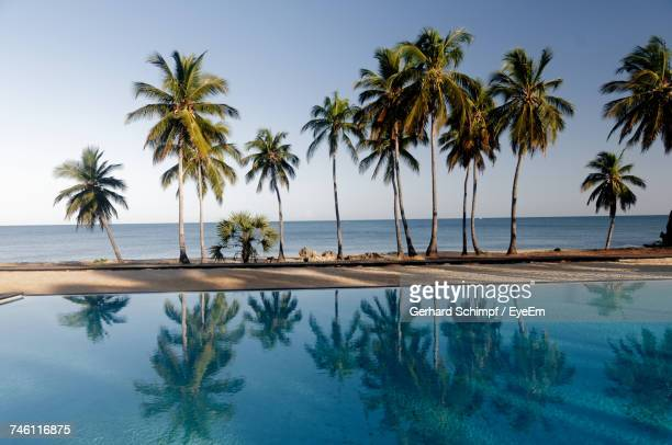 palm trees on beach against sky - gerhard schimpf stock photos and pictures