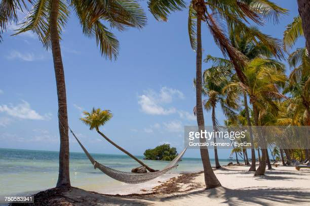 palm trees on beach against sky - key west stock photos and pictures