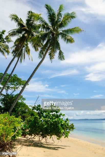 palm trees on beach against sky - marek stefunko stockfoto's en -beelden
