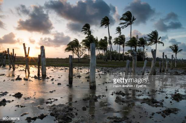 palm trees on beach against sky - kuantan stock pictures, royalty-free photos & images