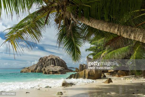 palm trees on beach against sky - la digue island stock pictures, royalty-free photos & images