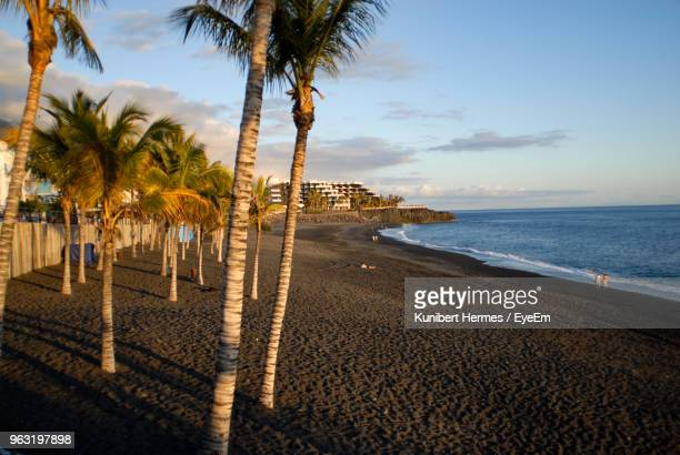 palm trees on beach against sky - arrecife stock photos and pictures