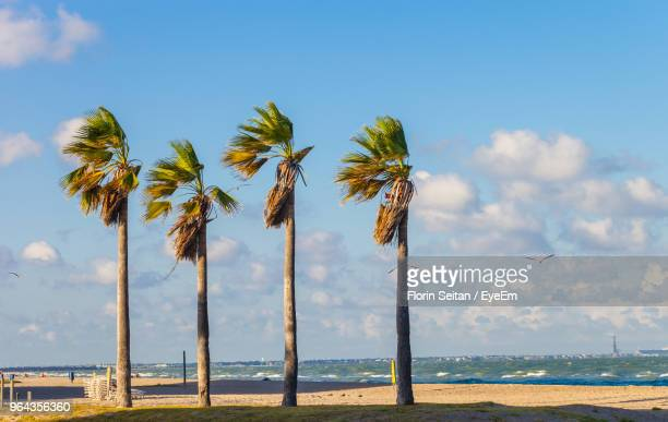 palm trees on beach against sky - corpus christi - fotografias e filmes do acervo