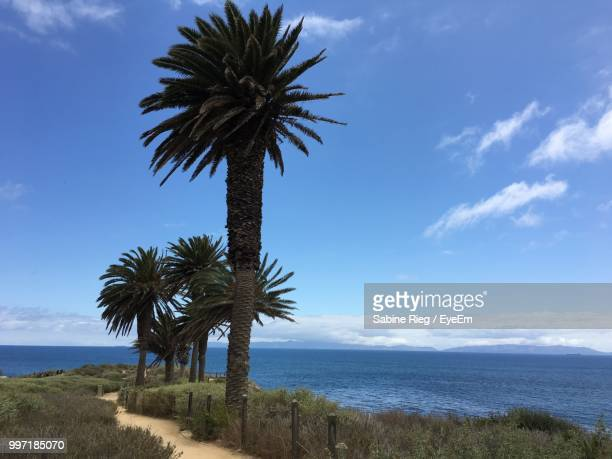 palm trees on beach against sky - rancho palos verdes stock pictures, royalty-free photos & images
