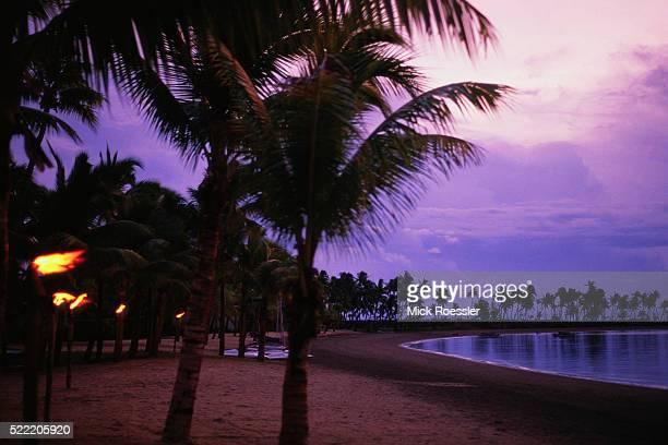 Palm Trees on Beach at Dusk