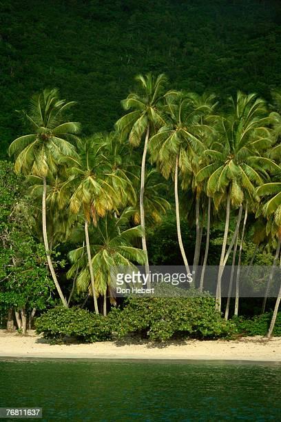 palm trees on beach, cane garden bay, virgin islands - cane garden bay stock pictures, royalty-free photos & images