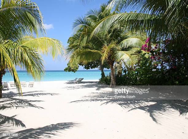 palm trees on beach in negril, jamaica - jamaica stock pictures, royalty-free photos & images