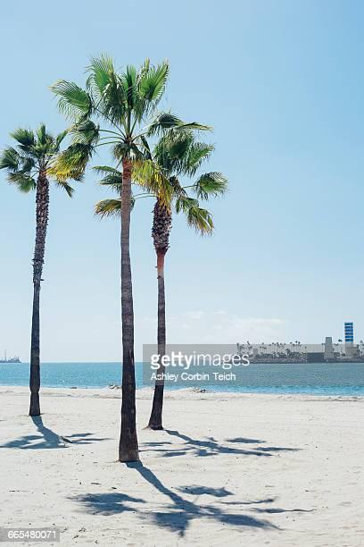 Palm trees on beach, Long Beach, California, USA