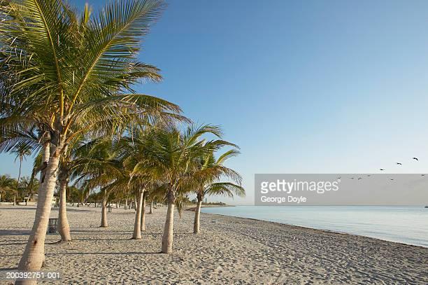 Palm trees (Palma sp.) on beach