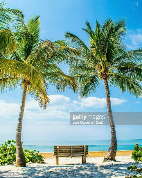palm trees on beach - key biscayne stock pictures, royalty-free photos & images