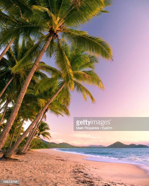 palm trees on beach - tropical climate stock pictures, royalty-free photos & images