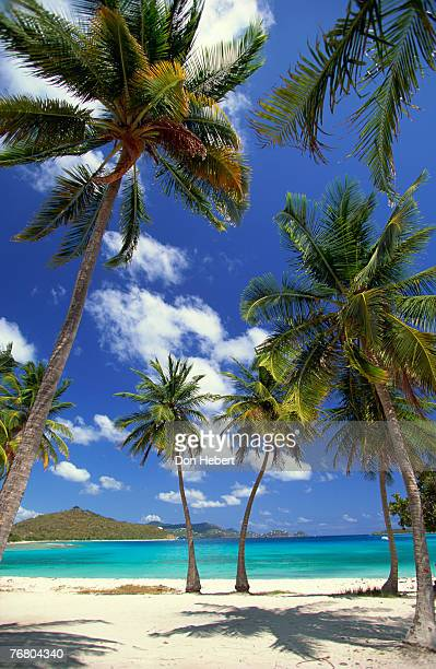 palm trees on beach, st. thomas, virgin islands - paisajes de st thomas fotografías e imágenes de stock
