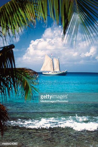 Palm trees on beach with sailboat in the distance off Mustique Island, Grenadines, Caribbean