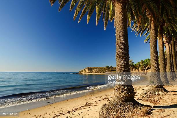palm trees on california coast - santa barbara california fotografías e imágenes de stock