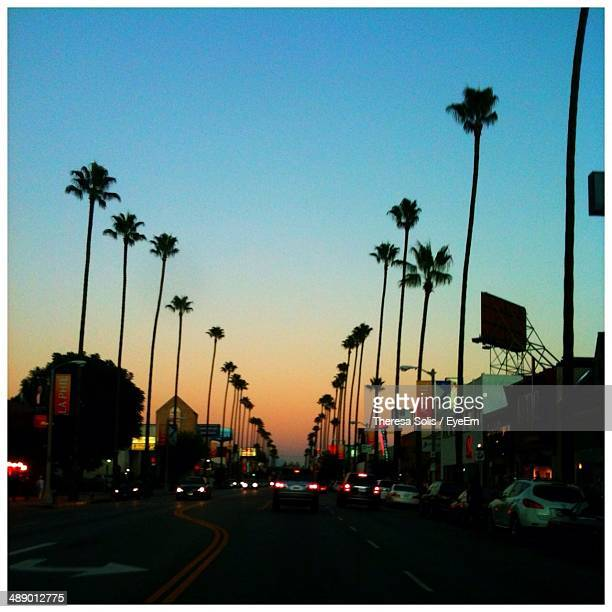 palm trees on city street - los angeles photos et images de collection