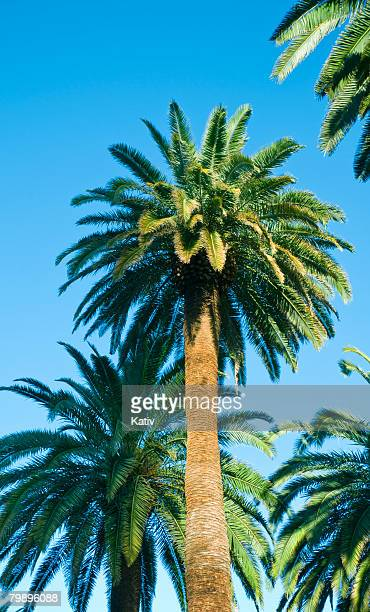 Palm Trees on clear sky
