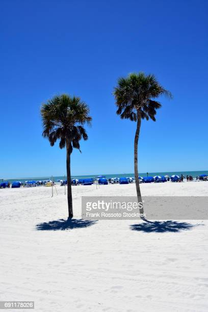 2 palm trees on clearwater beach, florida