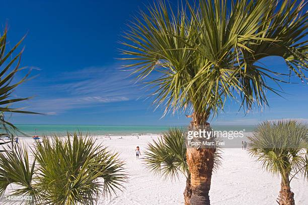 palm trees on clearwater beach. - clearwater florida stock pictures, royalty-free photos & images