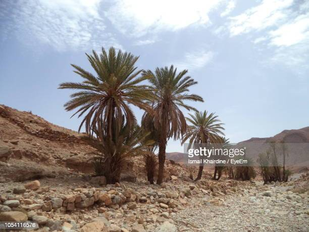 palm trees on desert against sky - ismail khairdine stock photos and pictures