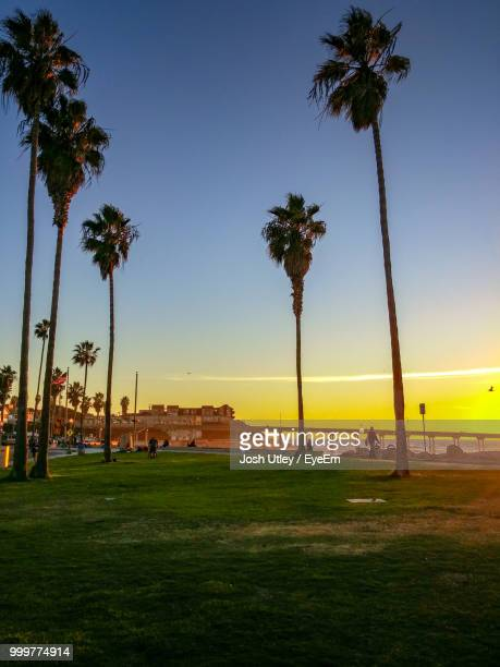 Palm Trees On Field Against Clear Sky At Sunset