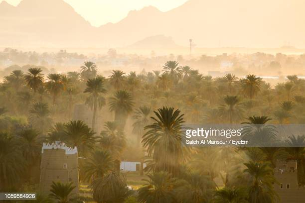 palm trees on field against sky during sunset - saudi stock pictures, royalty-free photos & images