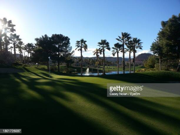 palm trees on golf course against clear sky - casey nolan stock pictures, royalty-free photos & images