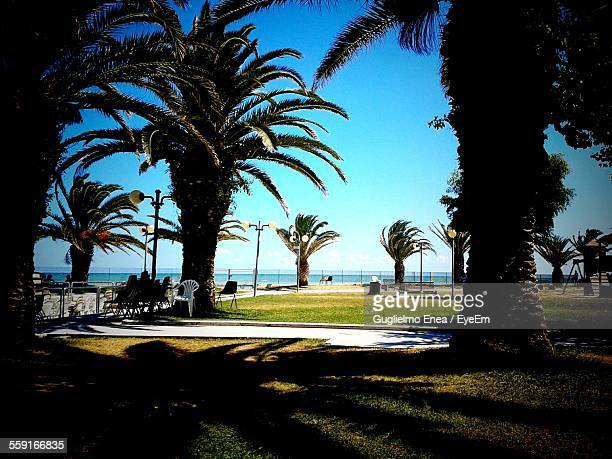 Palm Trees On Grassy Field Against Clear Blue Sky At Beach Resort