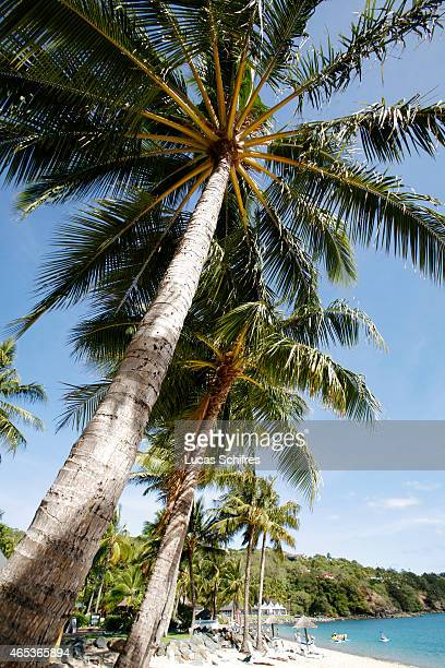 Palm trees on Hamilton Island on December 25 2008 in Queensland Australia