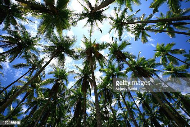 Palm trees on Isla Tortuga on Nicoya Peninsula, Costa Rica. .