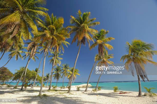 Palm trees on La Feuillere beach MarieGalante Guadeloupe Overseas Department of the French Republic