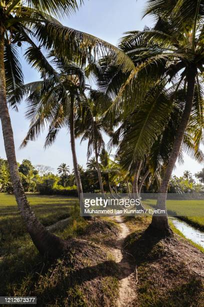 palm trees on landscape against sky - kochi india stock pictures, royalty-free photos & images