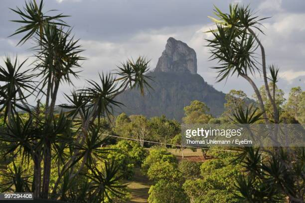 palm trees on landscape against sky - glass house mountains stock pictures, royalty-free photos & images