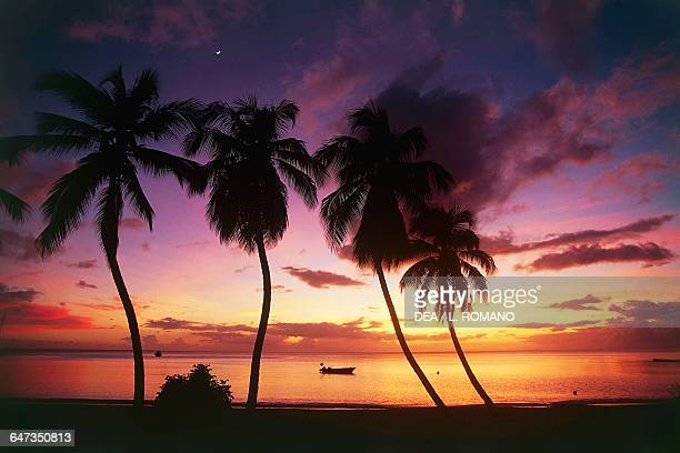 Palm trees on Les Salines beach at sunset Martinique Overseas Department of the French Republic