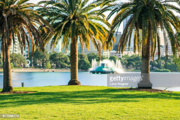 palm trees on meadow against florida lake - orlando florida stock photos and pictures