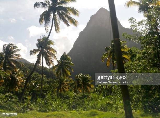 Palm Trees On Mountain Against Sky
