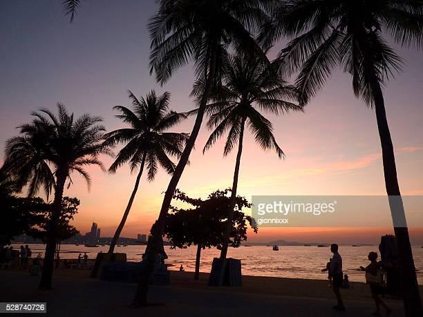 palmen am strand von pattaya während dem sonnenuntergang, thailand - golf von thailand stock-fotos und bilder