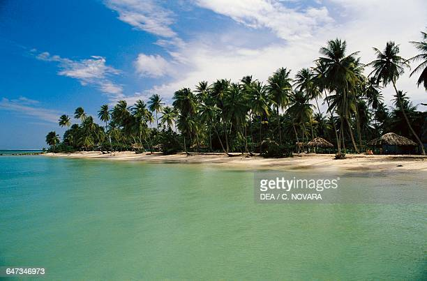 Palm trees on Pigeon Point Beach Republic of Trinidad and Tobago