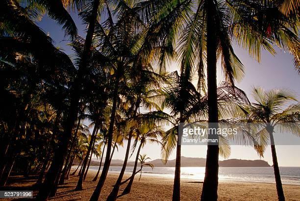 palm trees on playa carrillo - playa carrillo fotografías e imágenes de stock