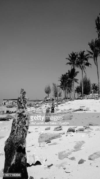 palm trees on shore against clear sky - saka stock pictures, royalty-free photos & images