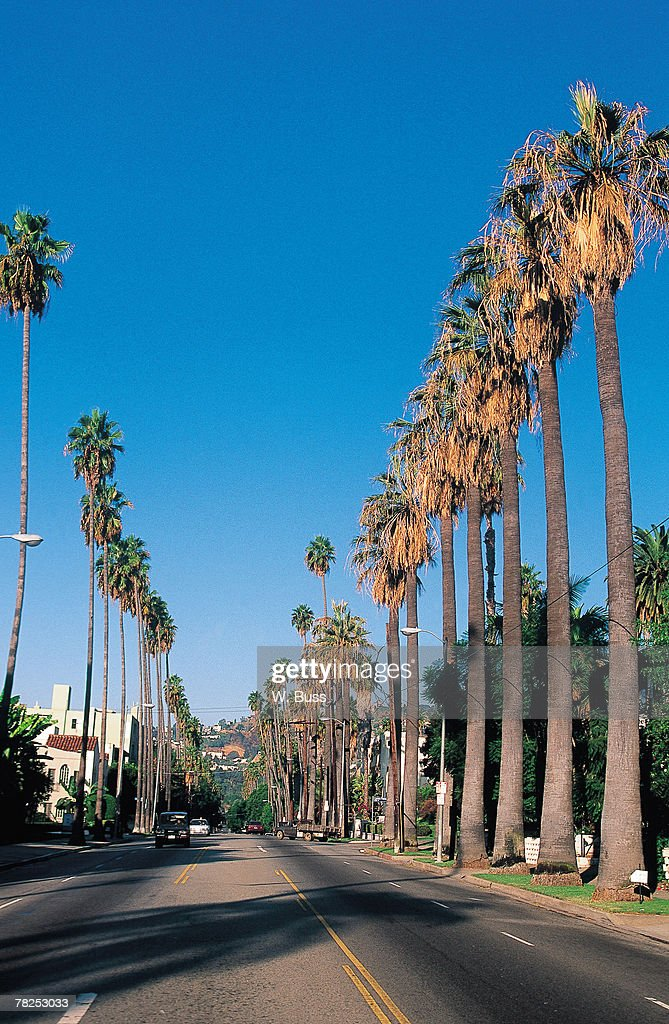Palm Trees On Street Los Angeles California Usa Stock ...