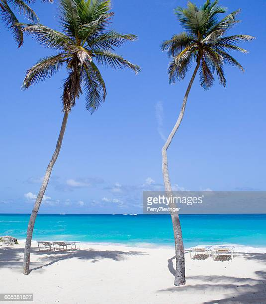 Palm trees on the beach, Barbados, Caribbean