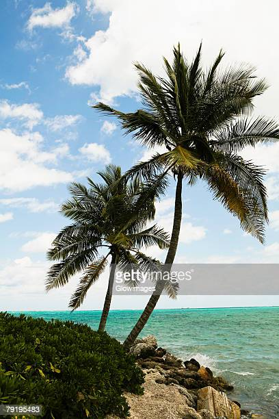 palm trees on the beach, cable beach, nassau, bahamas - cable beach bahamas stock photos and pictures