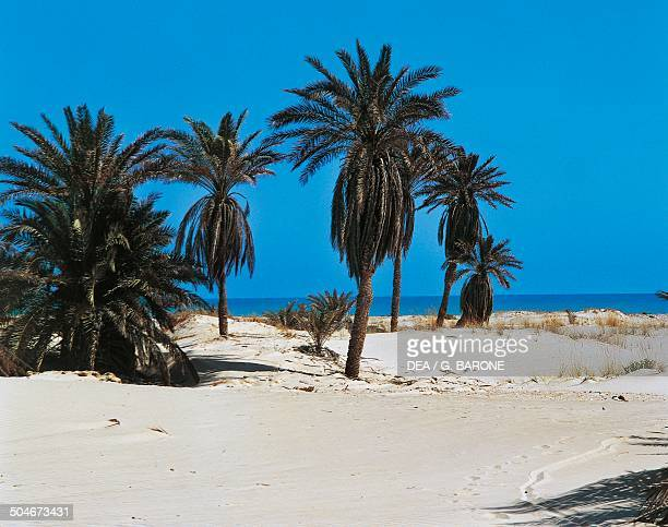 Palm trees on the beach Djerba Tunisia